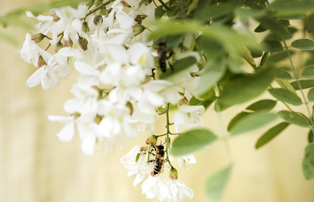 Maltempo: allarme per le api e il miele in Italia
