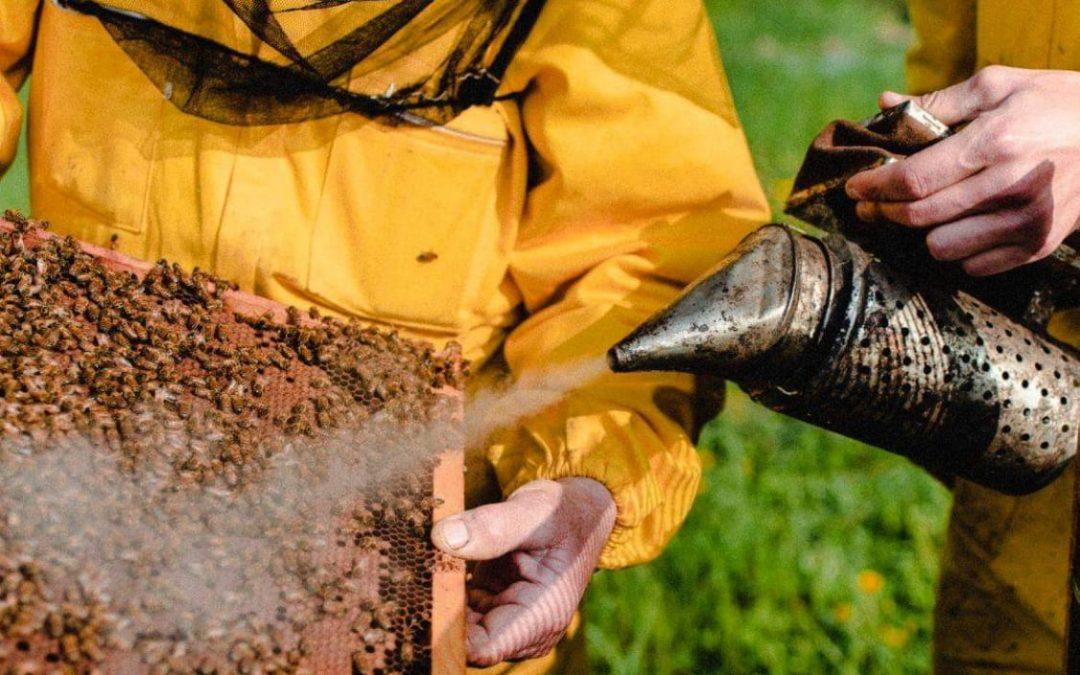 Sant' Ambrogio protettore di api e apicoltori